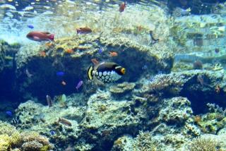 沖縄美ら海水族館 (4)