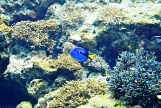 沖縄美ら海水族館 (3)