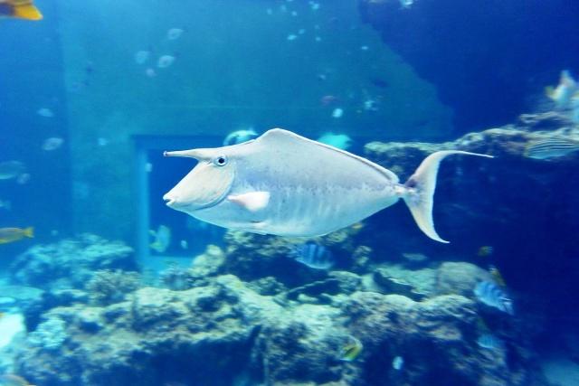 沖縄美ら海水族館 (6)