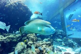 沖縄美ら海水族館 (7)