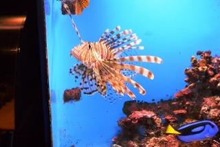 沖縄美ら海水族館 (8)