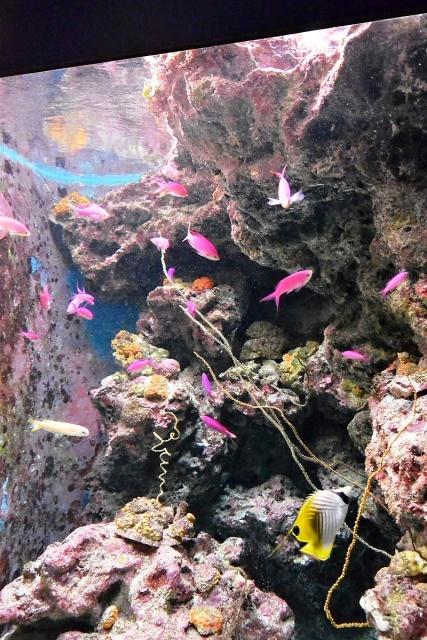 沖縄美ら海水族館 (9)