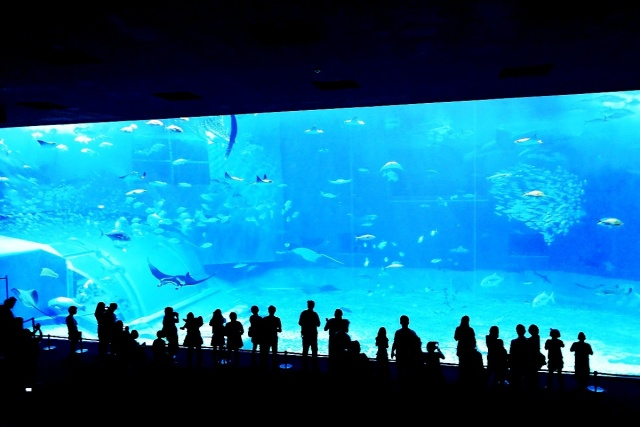 沖縄美ら海水族館 (12)
