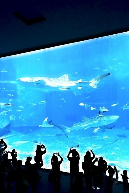 沖縄美ら海水族館 (14)