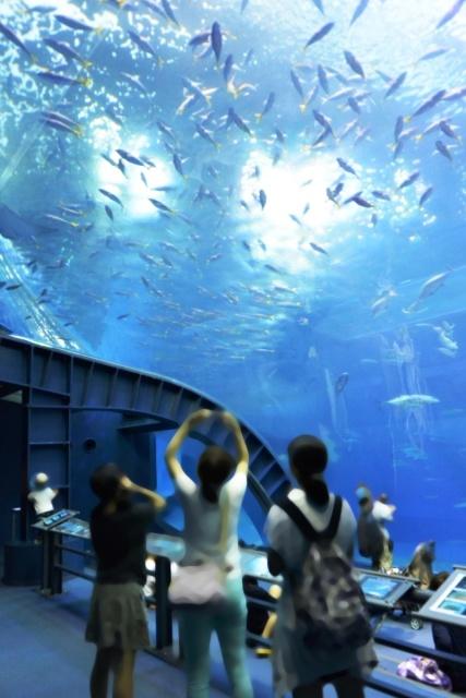 沖縄美ら海水族館 (16)