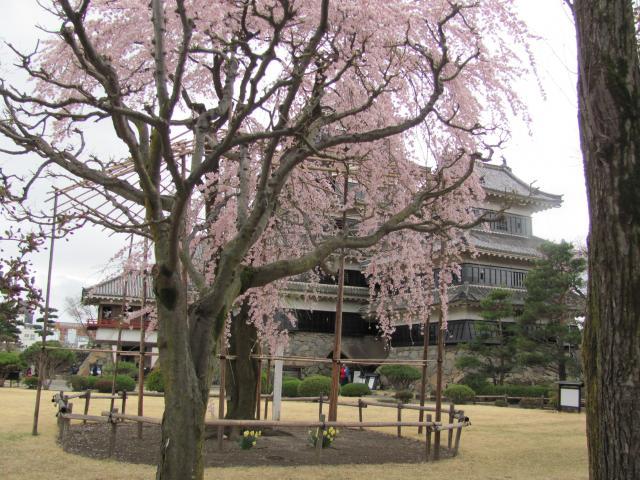 松本城桜H