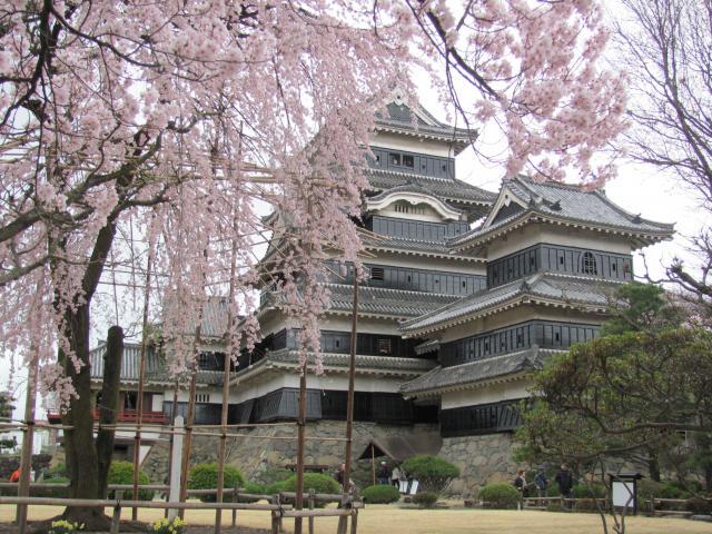 松本城桜G