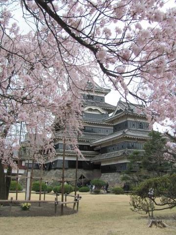 松本城桜F