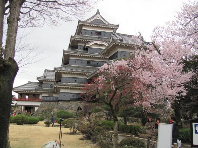 松本城桜E