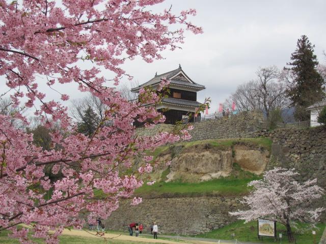 上田城桜A