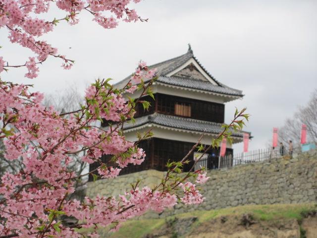 上田城桜B