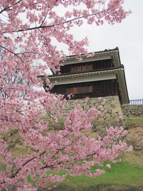 上田城桜E