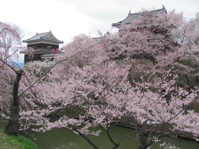 上田城桜F