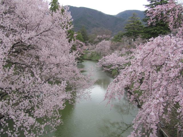 上田城桜G
