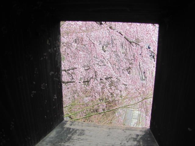 上田城桜I