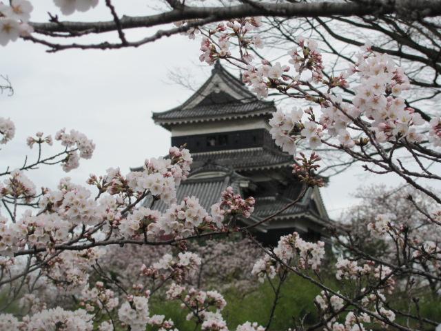 松本城桜2015.4.5A