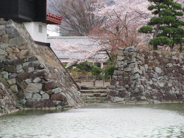 松本城桜2015.4.5B