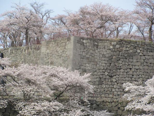 小峰城桜2015.4.12D