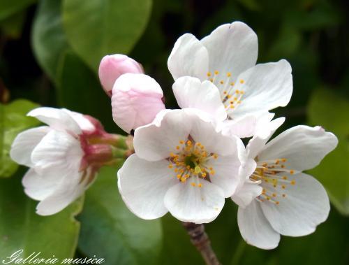 日本の春3