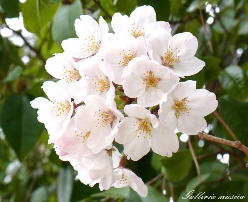 日本の春5