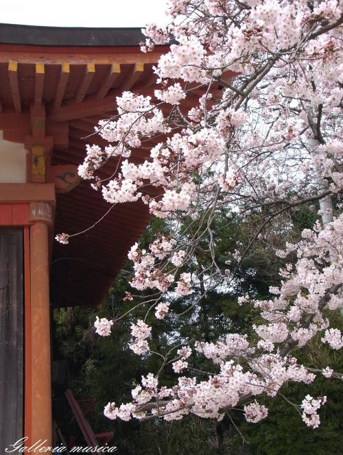 日本の春7