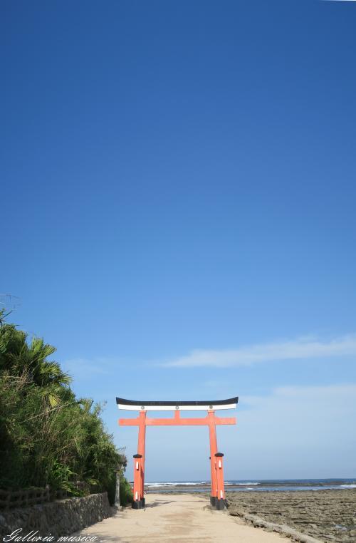 青島神社7