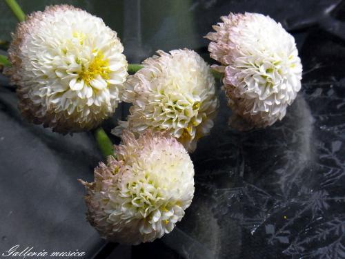 3枯れゆく花の美