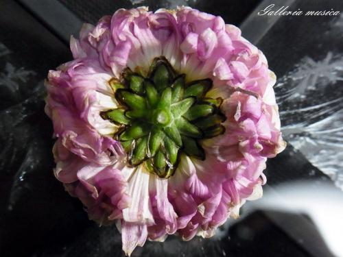 4枯れゆく花の美