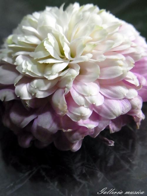 枯れゆく花の美5