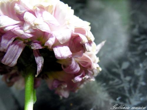 枯れゆく花の美6