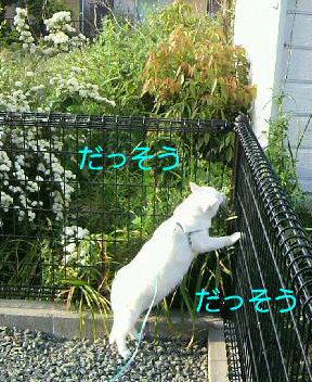 P1000205_2015050507545338a.jpg