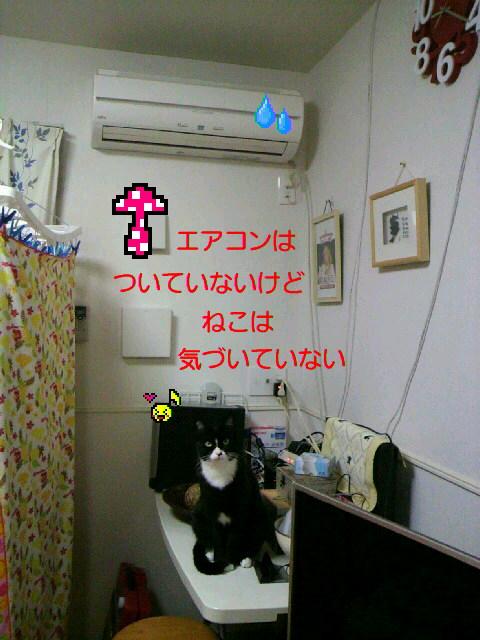 P1002370_20150106140422197.jpg