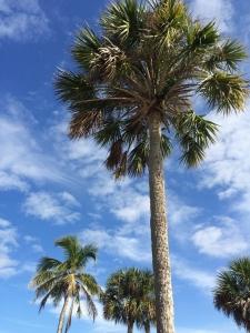 2014冬フロリダ旅行!