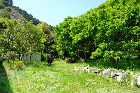 長瀬の栗林
