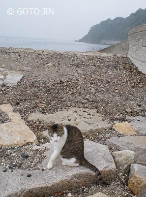 兵庫の旅 赤穂御崎 猫