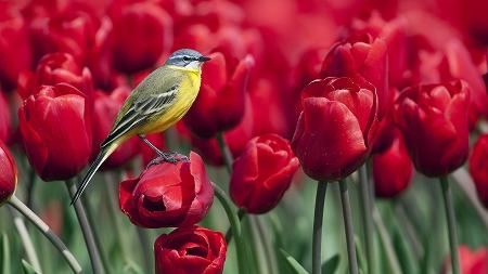 チューリップと鳥