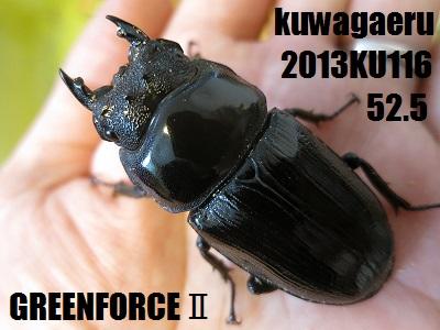 2013KU116525.jpg