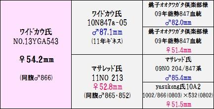 13YGA543②