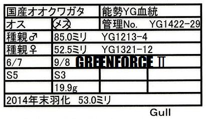 YG1422-29♀530早期
