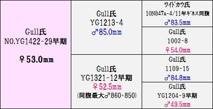 YG1422-29②