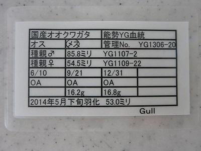 yg1306-20-530.jpg