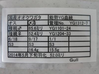 yg1312-7-520.jpg