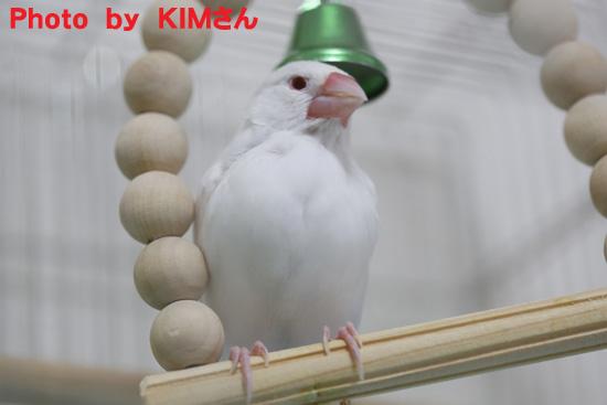 KIMさん撮影の丸 5