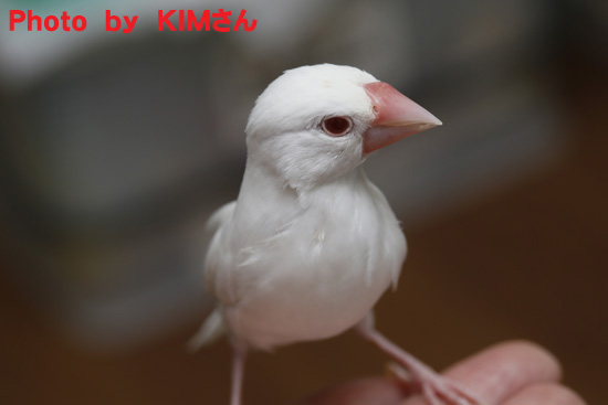 KIMさん撮影の丸 3