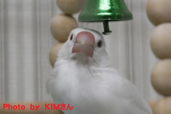 KIMさん撮影の丸 1