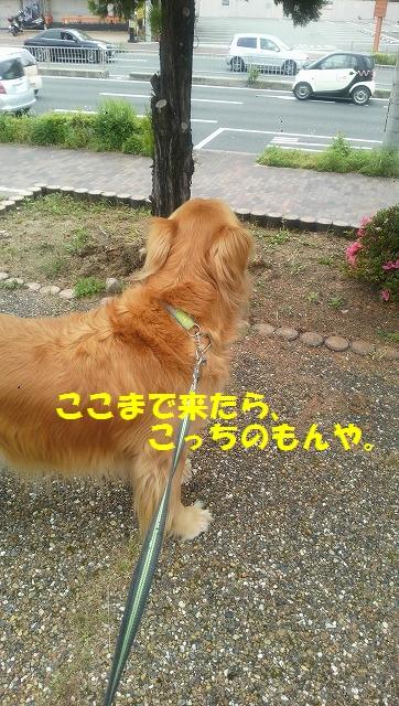 DCIM0840 (1)