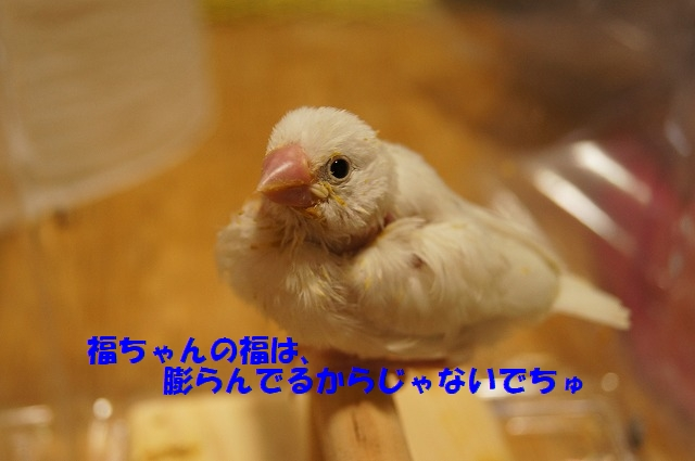 DSC05132.jpg