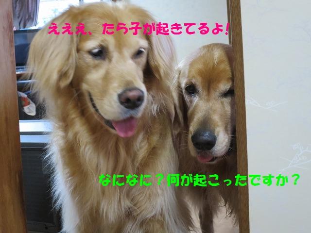 IMG_4090.jpg
