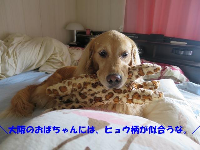 IMG_4144.jpg