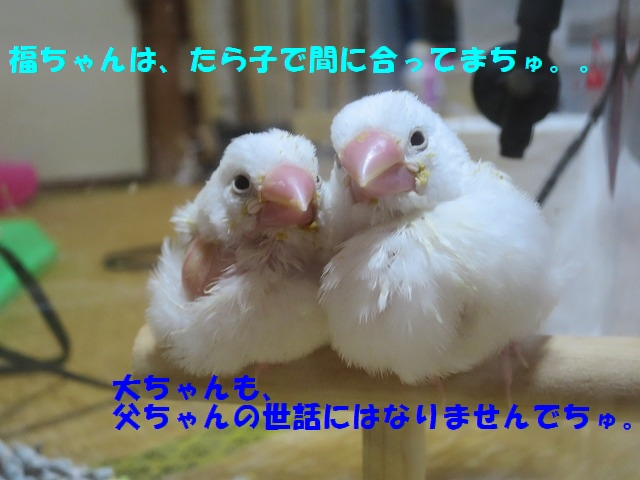 IMG_4196_20150612221840d49.jpg